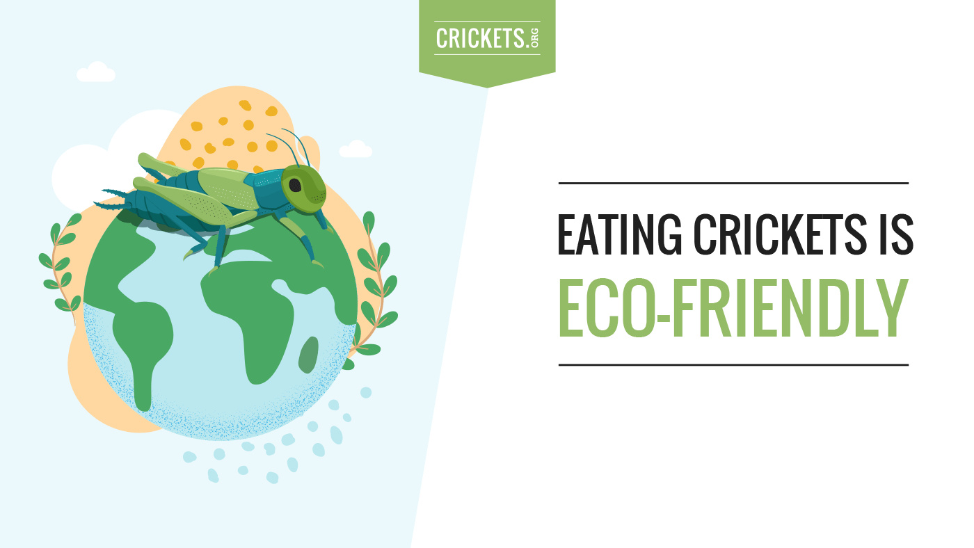 Eating crickets is eco-friendly