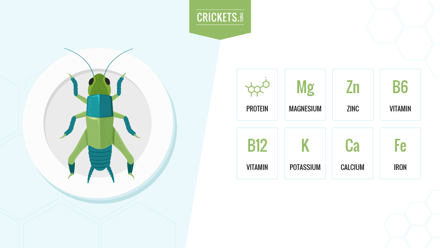 Cricket nutrition information
