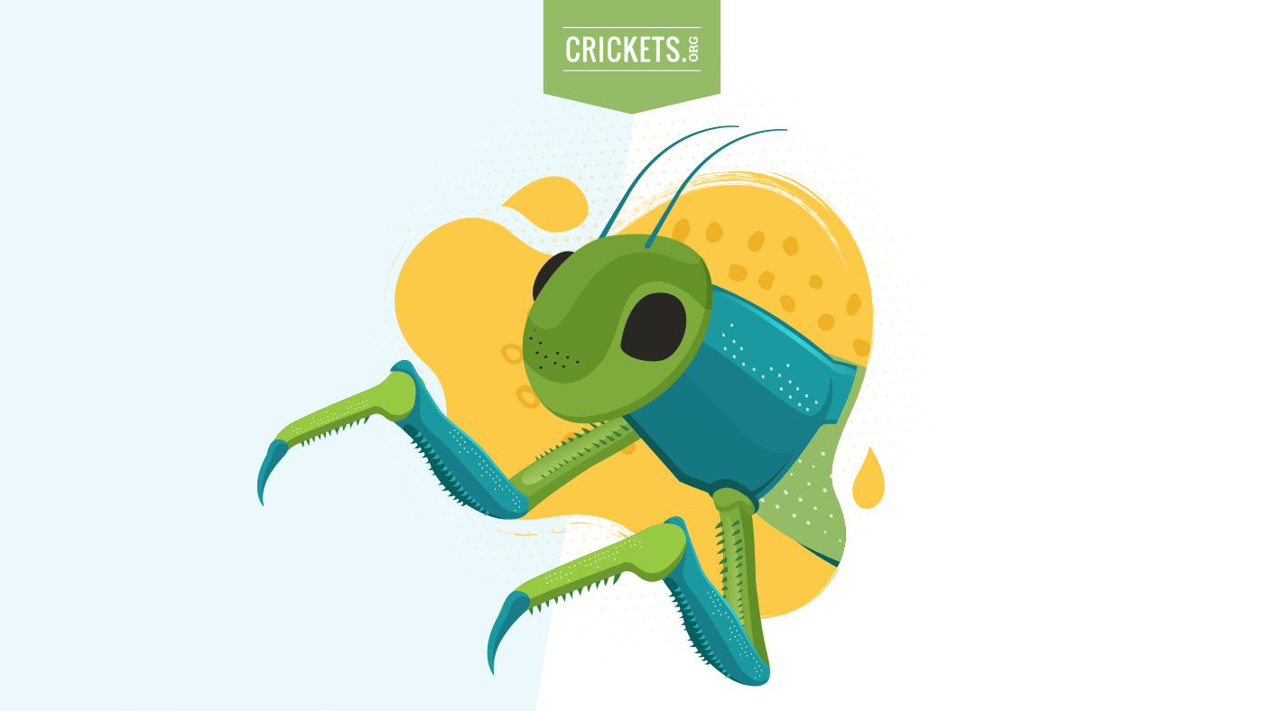 Eat Crickets